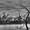 Tree in the Missouri River near Oahe Dam