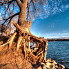Exposed tree roots along the Missouri River near Pierre