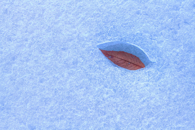 Leaf in the ice of the Missouri River