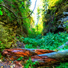 Trail in Spearfish Canyon