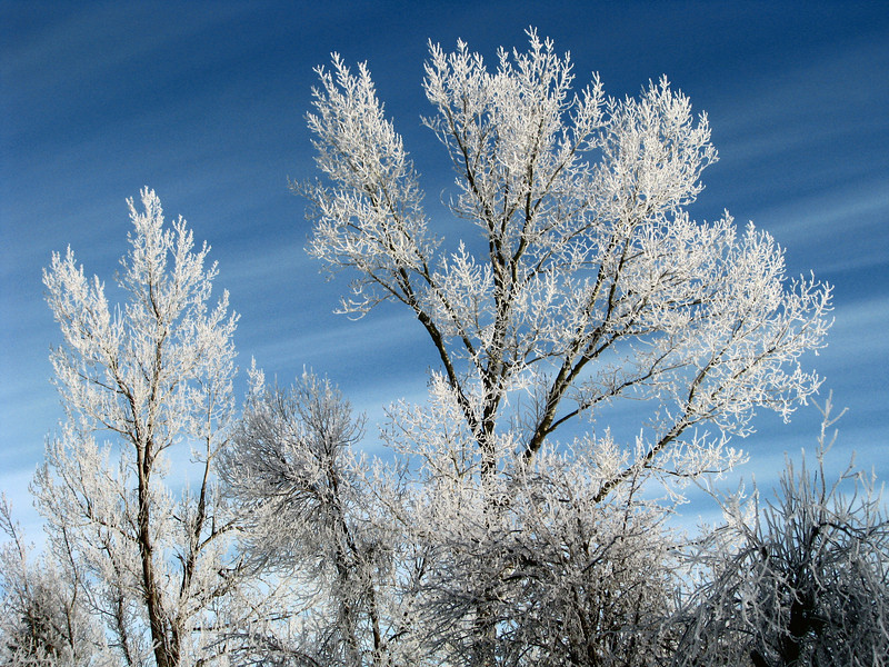 Frost in Spearfish