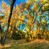 Evening light on the trees at the Oahe Downstream Recreation Area