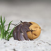 Heremietkreeft / Hermit Crab