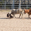 Ranch Rodeo Dogs SS11596