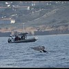 Gray whale tail fluke up close, Whale Watching trip, San Diego County, California, January 2015