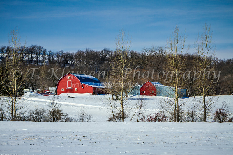 A small farm with red barns in a snowy landscape near Morden, Manitoba, Canada.