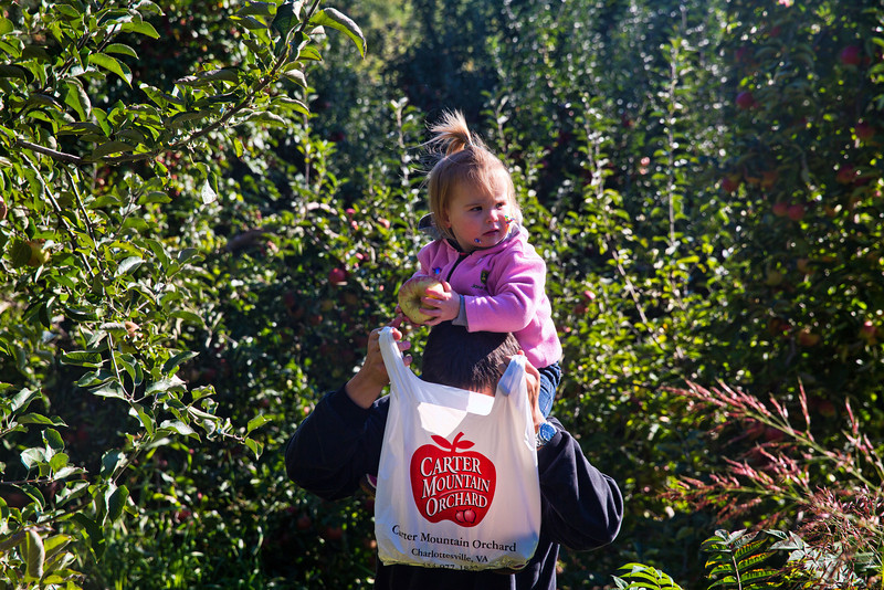 Steve and Mia apple picking 2 - 10-20-2013