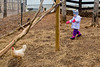 Mia chasing a chicken - 2014-02-08