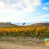 Fall in El Paso de Robles