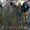 Rose Pruning Demonstration