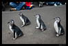 March of the Penguins 7-27-13