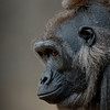 Fortworth Silverback - Pictorial<br /> Score 13<br /> Dwayne Anders