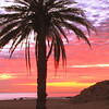 Palm Tree and Dawn Sky, Los Cabos, Mexico