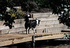 """Miso patroling the dock after a return from an invigorating ride on the bow of the speedboat.<br /> <br /> Her pacing seemed to say, """"Are we done?  We can't be done!  I want to go again.""""<br /> <br /> Crooked Lake, SE Michigan"""