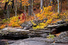 M 155                         Autumn color along the exposed shale riverbed of the Presque Isle River in the Porcupine Mountains Wilderness State Park, Michigan.