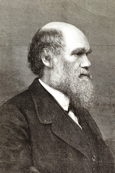 Engraving of naturalist Charles Darwin from 1877
