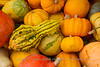 Gourds in the Fall