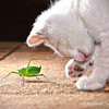 Cat and the Katydid.