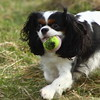 Daisy chasing about after the ball at Glennifer Braes
