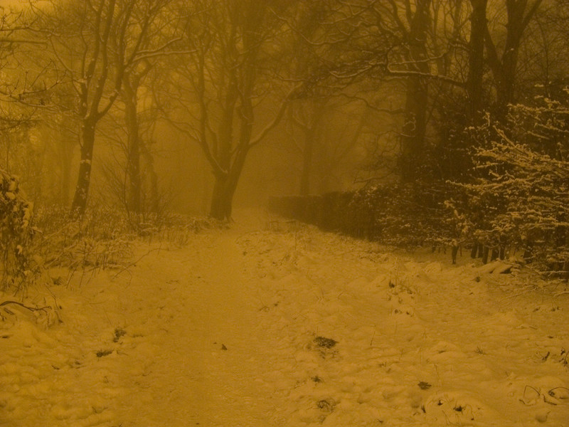 Bluebell Woods in Johnstone, taken in the evening during thick fog with the snow lying.