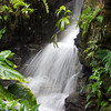 Climatron Waterfall