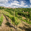 Rothenburg Vineyard