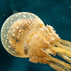 colorful-jelly-fish-1-2