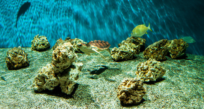 aquarium-sea-life-2-1