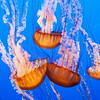 colorful-jelly-fish-1