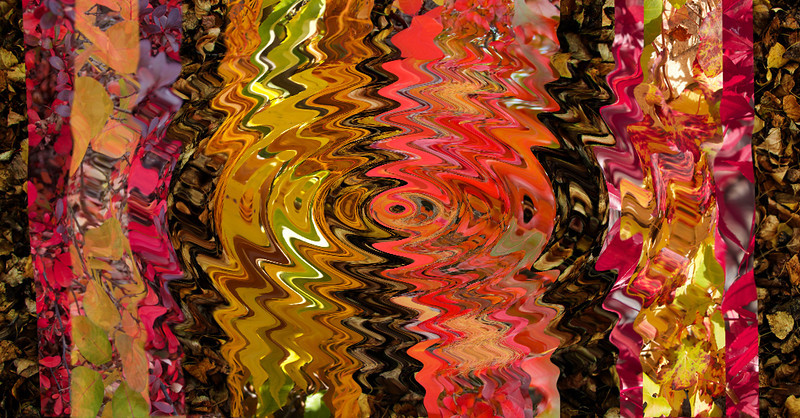 Autumn Colours Heather Macleod Very colourful and busy image loaded with colour impact, however does the image hold the viewer's interest long-term after the initial impact? Accepted