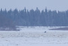 Snowmobile traffic on the Moose River headed to Moose Factory from Moosonee.
