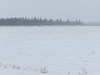 South end of Butler Island in the Moose River during falling snow.
