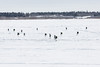 Canadian army paratroopers on the Moose River at Moosonee after being dropped from a C-130 Hercules.