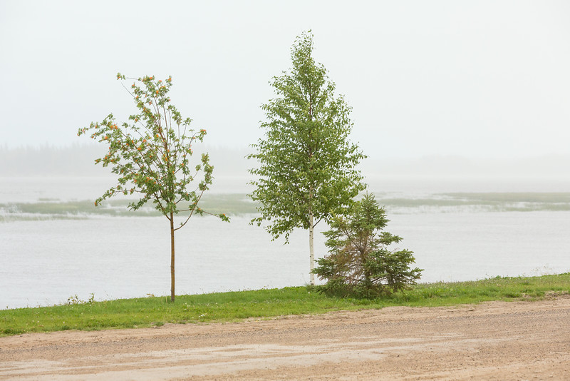 Trees along the Moose River in Moosonee in moderate rain.
