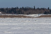 Winter road going up onto Moose Factory Island.