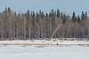 Snowmobile in front of Charles Island in the Moose River across from Moosonee.