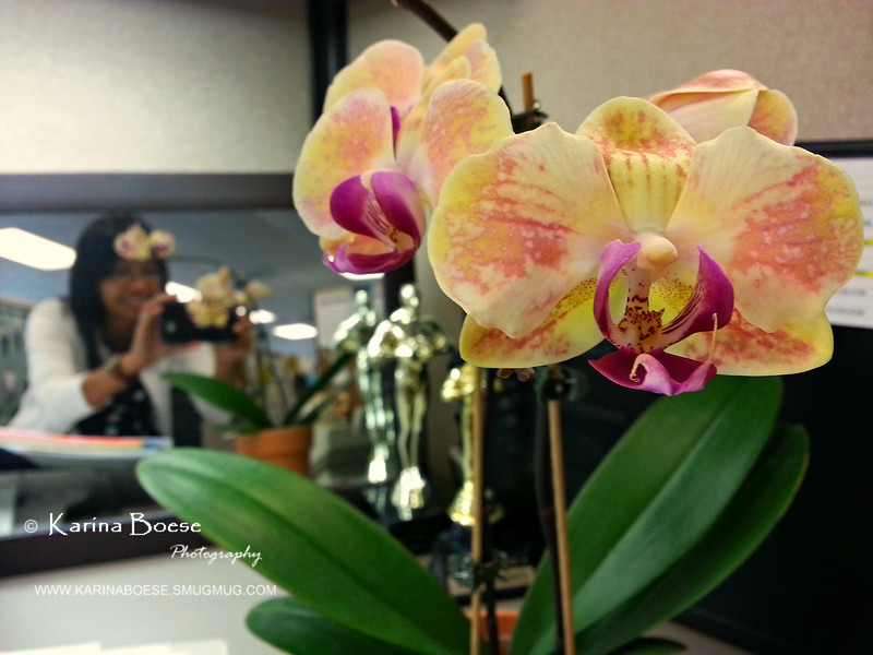 Blooming Orchid Wed. May 1, 2013 (day 298)  I just love having blooming orchids on my desk.   Did I say love?  Yeeesssssssss.. I'm loving it!