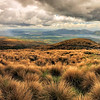 Tongoriro NP (NZ) Hike Grasslands