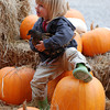 José Quezada/For the Times-Standard<br /> <br /> Chickens and pumpkins were all two year old Myles Lustig of Bayside needed for a good time as he and his parents joined hundreds of pumpkin pickers at Christie's Ranch in Blue Lake on Sunday.