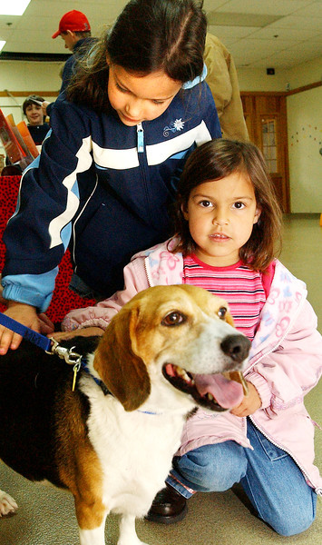 (050408)-2008_0504_TYG_AnimalRescue--- Katesha Montalvan ,6, and Kylie Alicea, 4, (kneeling) both of Lowell visit with Taylor an 8-year-old Beagle who is wating to be adopted by the Lowell Humane Society.  DIG IM No.0865..SUN/Amanda-Beth Potter