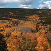 20081002_ASPENS_FALL_COLOR_VALLEY