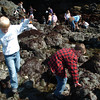 Mark McKenna/The Times-Standard<br /> Dawson Scolari, left, Kameron Berg, look for sea life in the tide-poole at Trinidad State Beach on Friday. He was on a field trip with all the first grade classes at Ridgewood Elementary School.