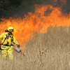 John Driscoll/The Times-Standard<br /> Eureka firefighter Kevin Stokes lights grass on fire during a prescribed burn in Humboldt Redwoods State Park Wednesday.