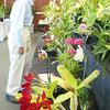 Shaun Walker/The Times-Standard<br /> <br /> Visitors look at the main display table at the Humboldt Orchid Society's Annual Spring Show in the Humboldt Bay Aquatic Center in Eureka on Saturday. The event featured workshops, large displays of blooming orchids, and plants for sale.