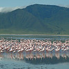 Flamingos at the Base of a Mountain