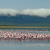 Flamingos with Clouds Behind