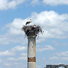 Stork Nest on a Roman Pillar