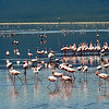 Flamingos in a Group