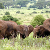 Elephant Family with Ears Spread