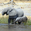 Elephant Mother & Baby Splashing